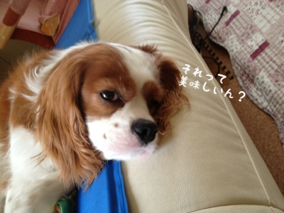 fc2blog_2013091316280612e.jpg