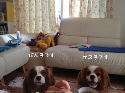 fc2blog_2013091316451896e.jpg