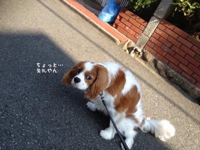fc2blog_201309232254423e4.jpg