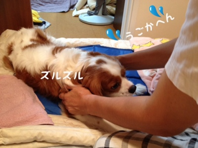 fc2blog_20130926213820c07.jpg