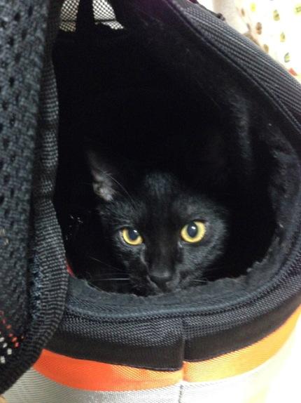 黒猫文太さん