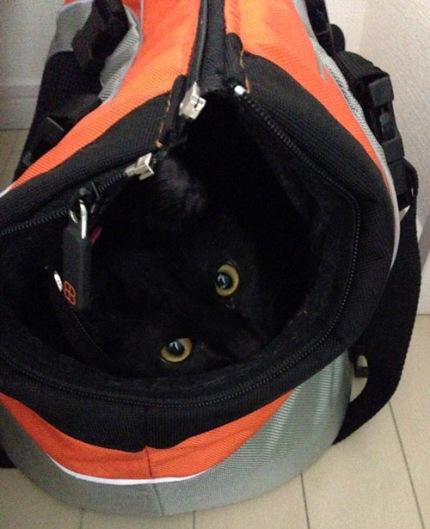黒猫文太さん2