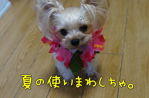 DSC08177.jpg