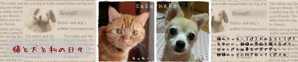 猫と犬と私の日々