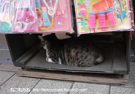 お土産屋さんにいたキジ白猫さん写真