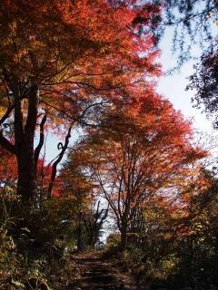 花貫渓谷の紅葉 不動滝付近