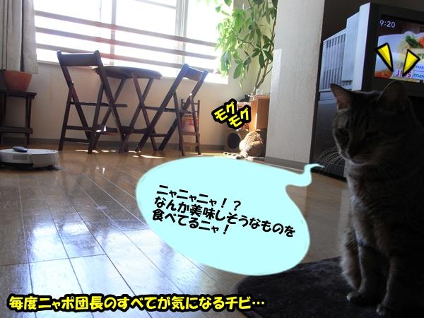 猫の世界は甘くない2