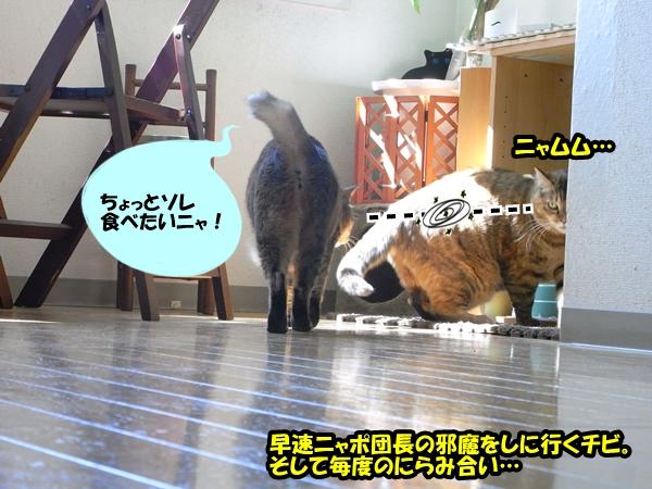 猫の世界は甘くない3