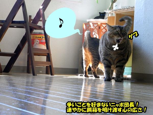猫の世界は甘くない4