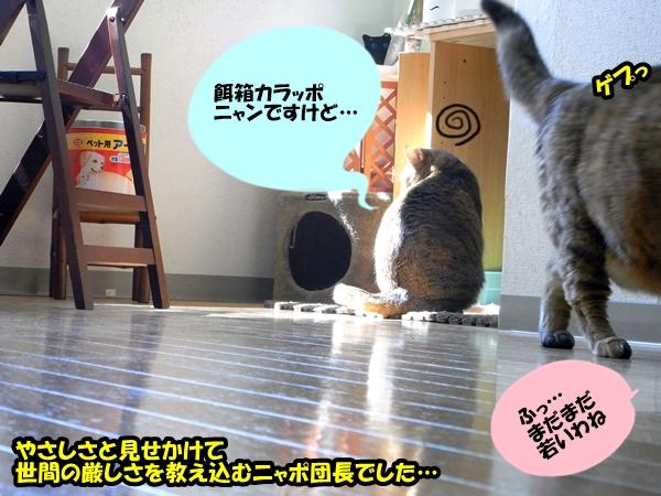 猫の世界は甘くない5