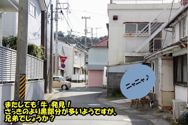 ニャポ旅 伊豆下田