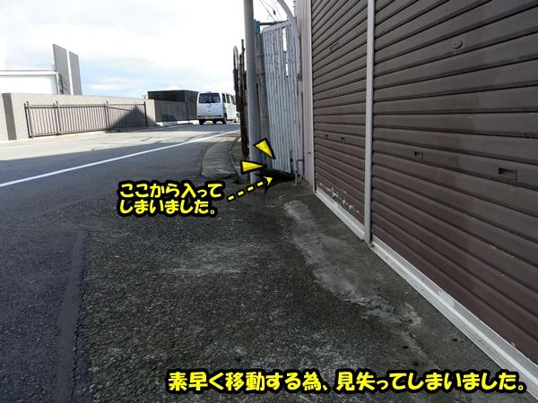 ニャポ旅 伊豆下田編