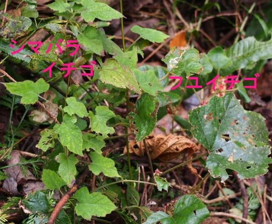 201401152210344a7.jpg