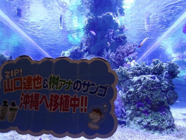 すみだ水族館の珊瑚2