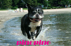 pinopino