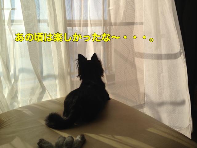 112_2.jpg