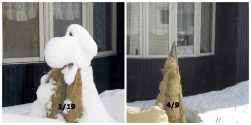 すぬーぴーの雪融け
