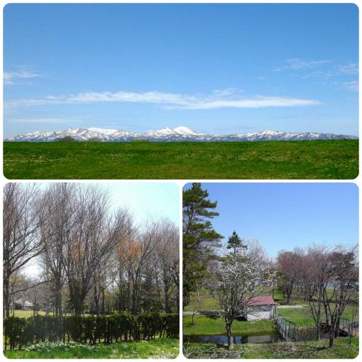 北光公園の桜
