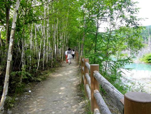 青い池遊歩道