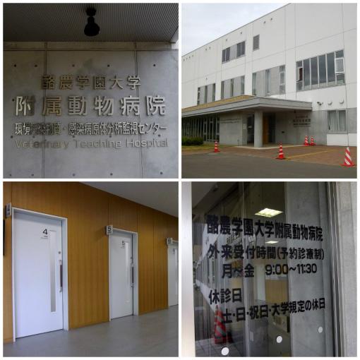 酪農学園大学附属動物病院