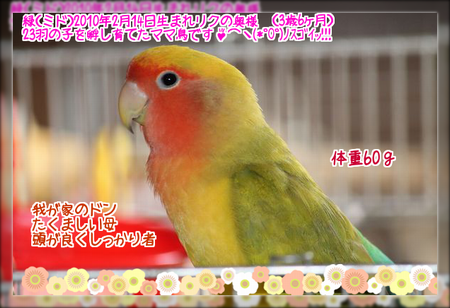 2013082614292336a.png