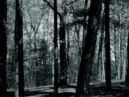 forest_2805996.jpg