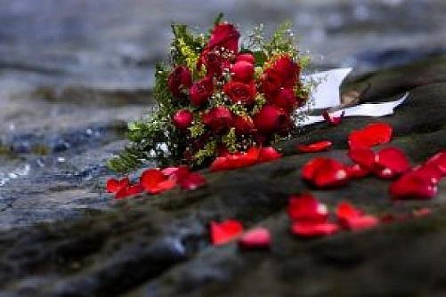 フリー画像・散ったバラ