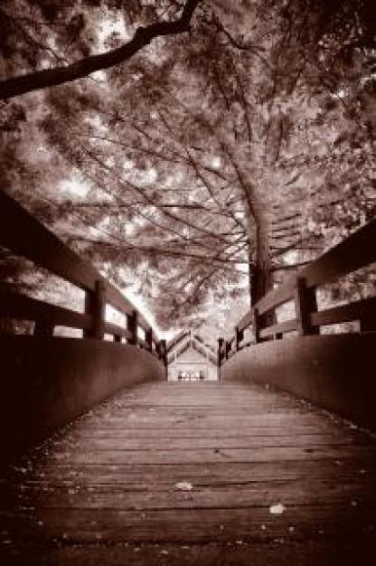 フリー画像・セピアな春