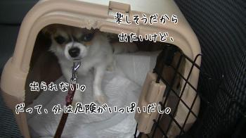 20130913_10.jpg