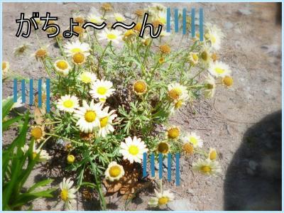 gakkari3.jpg