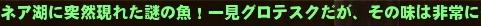 テロップ SAO釣り ニシダ 2