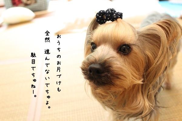toshi130624-02.jpg