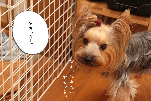 toshi130820-03.jpg